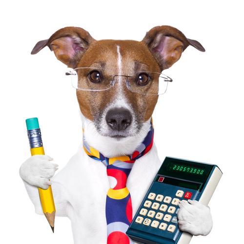 Gestão financeira no mercado veterinário: 7 dicas para clínicas e pet shops