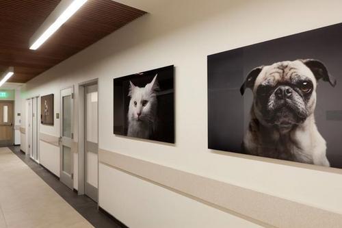 Como lidar com as especialidades veterinárias: análise e questionamento.
